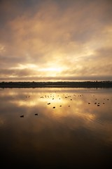 Lake Joondalup - June 2012 - No.5 (Bryan Garnett-Law) Tags: morning lake ducks perth westernaustralia joondalup lakejoondalup neilhawkinspark