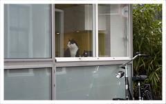 Bike guard :)) (Hans Hamilton) Tags: pentax k20d pentaxian pentaxart