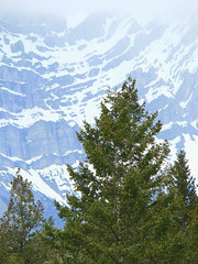 """Natural Rhythm""  DSC00374 (kluehirschSnowpine) Tags: trees canada mountains landscape rocks alberta banff magnificent banffnationalpark"