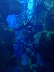Diving Silfra 12