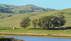 Landscapes at Nicasio Reservoir (Dunby PICS) Tags: county water creek dam district marin reservoir valley petaluma novato municipal nicasio seeger