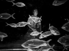 ::.: (::.: ion markel) Tags: barcelona people bw fish pez apple aquarium blackwhite gente streetphotography bn catalunya catalua bcd blanconegro bartzelona laquarium arrai zuribeltz katalunia jende iphone5 ionmarkel iphoneography kalekumeak iphonekeriak zoorakeriak
