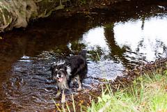 paddling (pamelaadam) Tags: family autumn dog animal digital scotland collie aberdeenshire rosie fotolog september 2014 kennethmont leithhall thebiggestgroup