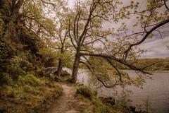Balmaha Pathway, Balmaha, Loch Lomond, Scotland (Mark Maden) Tags: wood bridge cloud mountain reflection tree water canon scotland rocks may large scottish wideangle shore loch 1018 1020 balloch lochlomond stirlingshire munro 2015 balmaha 1200d