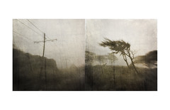 Tramlines/trees (mark kinrade) Tags: manx tramlines mist diptych manxlandscapes markkinrade unusual