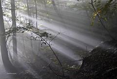 A volte capita (claudiophoto) Tags: bosco foresta appenninomarchigiano luce morninglight fotodellemarche paesaggidellemarche canfaito sanvicino apiro raggidelsole montagne canon