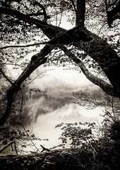 Obersee (Geolilli) Tags: iphone obersee alps bavaria lake lakescape fog rain phone branch snapseed landscape composition bw blackwhite