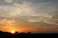 Horses & Sky (Blue-Eyed Kentucky) Tags: horses sunsets lexingtonkentucky blueeyedkentucky thoroughbreds bluegrass sky
