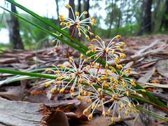 Fireworks (jo.elphick) Tags: burrill lake nsw australia