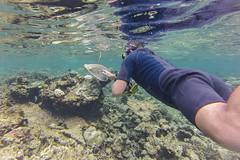 echte Karettschildkrte (astroaxel) Tags: malediven diamonds athuruga resort unterwasser schnorcheln echte karettschildkrte schildkrte wasserschildkrte