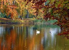 Autumn Rhapsody (swetlanahasenjäger) Tags: griebenow schlospark herbst schwäne herbstfarben contactgroups saariysqualitypictures worldwidelandscapes natureselegantshots theoriginalgoldseal nature'splus thebestofmimamorsgroups onlythebestofflickr