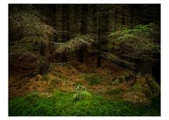 Woodland wishes (Frans van Hoogstraten) Tags: corrourstation rannochmoor scotland uk wood forest autumn