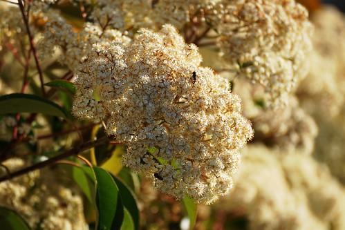 Gundagai flowers