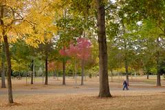 Crayons de couleurs Coloured pencils (Chander-17) Tags: arbres france couleur charentemaritime larochelle paysages parcs aquitainelimousinpoitoucharen aquitainelimousinpoitoucharentes fr