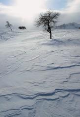 _MG_7453 (c0466art) Tags: 2015 chinese inner mogolia trip travel  grass land hill winter season snow world sunrise trees ice beautiful landscape scenery light canon 1dx c0466art