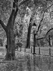 Rainy day - search the squirrel (Tonio06fr) Tags: lamp autumn daylight newyork reflection leaf day fall daytime tree nyc rainy park usa rain leaves america