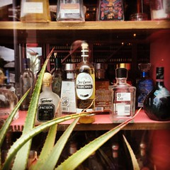 Tequila bottles at Mexico Bar, Auckland. (gezznz) Tags: newzealand auckland takapuna mexico bottles liquor tequila
