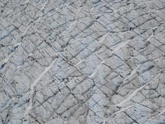 Crevasses - Glaciar Davidson, Glacier Bay NP, Alaska, EE.UU. - 03 (Banco de Imgenes Geolgicas) Tags: geology imagesearth science imagesimage bank ciencias de la tierra geologi geologa geolgia geologie gologie geologija eoloija eoloija geology geoloogia gjeologji heolohiya jarfri jeoloji jiologia xeoloxa     daeareg acht geolaocht          geomorfologa geomorphologie geomorphology geomorfologi gomorphologie geomorfologia yzey bilimi ghiacciaio glace glaciar glaciarism glacier gleccser gletscher gletsjer geleira gelo buzul eis eldfjall ice