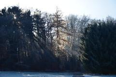 DSC_5499 Unser Mrchenwald in einem traumhaften Kristallkleid - Our fairytale forest in a dreamlike crystal dress (baerli08ww) Tags: deutschland rheinlandpfalz germany rhinelandpalatinate westerwald westerforest wald forest frost landschaft landscape licht light raureif hoarfrost nebel mist natur