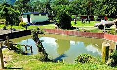 first pool (razel.mella) Tags: sabetohotsprings mudbath hotspring fiji nadi