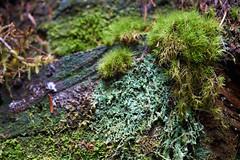 DSC01290-4800 (westonde) Tags: rokkor minolta rokkor3570mmf35 oregon mounthood forest