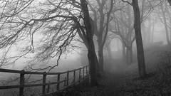 Foxdenton Park (pjfchad) Tags: fog foggy mist misty park foxdentonpark chadderton chaddertonfoxdentonpark foxypark tree trees wood greatphotographers greatestphotographers tmt