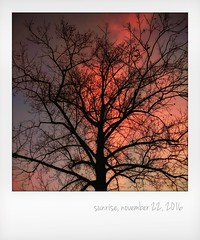 Sunrise, November 22, 2016 (jeanne.marie.) Tags: clouds onepieceofsky fall autumn tulippoplar silhouettes tree instant colorful ashevillenc november222016 sunrise