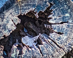 stump_HDR (JM Photog) Tags: canon 1dx zeiss lens sony rx 10 landscape hdr