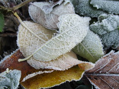 """"""" Frosty Autumn """" (seanwalsh4) Tags: 7dwf frosty leafs autumn cold wintery nice christmas frost seasonal bristol sean walsh nature trees"""