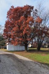 Hanging On (kendoman26) Tags: tree autumn autumncolors leaves niksoftware nikcoloreffex4pro nikon nikond3300 fall fallcolors tokinaatx1228prodx tokina tokina1228