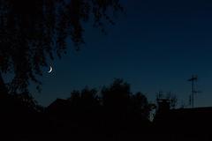 Blue Hour And The Moon (betadecay2000) Tags: bluehour blue hour moon lunar luna mond tranbant satellit dmmerung abend nacht nite night deutsch deutschland german germany blau dorf darfeld rosendahl nrw rosendahldarfeld halbmond erstesviertel viertel schwarz black himmel sky