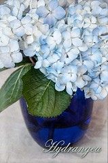 Hydrangea (lclower19) Tags: blue flower texture watercolor flora nikon pa filter hydrangea ttt 18200mm d90 pse9 promptaddicts beyondlayers assignment52162012 yankeecandlescents brushstrokesbwlc