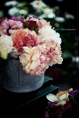 Flowers I can't do without (Elle***) Tags: show italy black colors dark table botanical daylight stand petals spring italian flora couple soft darkness purple milano softness can peony sensual queen regina lush fiori delicate viola thick botanica decadence onblack tributo omage paeonie peonie commande orticola ebbro mostramercato vinaccia ebrezza flowerly reginadeifiori leshirondellesphotography orticola2012 oldenamelcan vivaidellecommande
