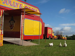Peter Jolly's Circus (Lady Wulfrun) Tags: red yellow geese derbyshire entrance trucks ilkeston lorries forddseries peterjollyscircus peterjolly jollyscircus