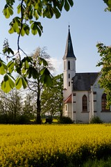 White church in yellow field (Michael Tracy's photos) Tags: poland nyas
