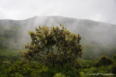 (Xrysa Karafti) Tags: tree ikaria may