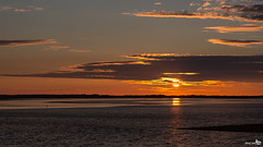 End of a day (and maybe from flickr) (BraCom (Bram)) Tags: sunset sun holland birds silhouette clouds canon reflections coast zonsondergang widescreen nederland thenetherlands vogels wolken 169 haringvliet zon stellendam silhouet kust zuidholland goereeoverflakkee spiegeling southholland canonef24105mm bracom canoneos5dmkiii
