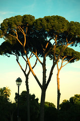 Grabbing the colors (Karal2000) Tags: park rome italy nikon nikkor colors street spring 50mm 18d vintage yellow travel photography trees d7000