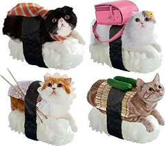 Sushi Cats (4577246c1e1b7b419e88cca8ab7d2749) Tags: that fun this funny dad time native top lol humor can mama waste has stupidity cheezburger i stuppid