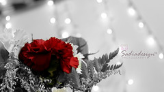 rse1 (SadiaDesigns) Tags: rose lights photographer bokeh saudi jeddah ksa jiddah arabartist