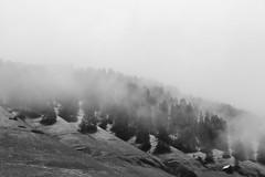 misty eye of the mountain below (nowimhaunted) Tags: mountain mountains montagna nebbia fog foggy albero tree trees black white bw