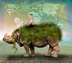 Save The Rhino!