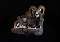 "Utah Taxidermist • <a style=""font-size:0.8em;"" href=""http://www.flickr.com/photos/27376150@N03/9353805032/"" target=""_blank"">View on Flickr</a>"