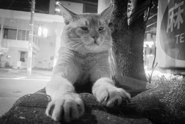 Today's Cat@2013-08-02