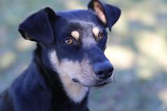 IMH_0306 (Max Hendel) Tags: camping dog canine cachorro canino dogslife canoneosdigital vidadeco vidadecachorro photobymaxhendel bymaxhendel fotografadopormaxhendel arealvaspbrazil maxhendel photographedbymaxhendel pormaxhendel canoneosphoto photographermaxhendel maxhendelphotography inarealvasp
