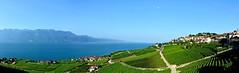 Lavaux, pays de vignes (Diegojack) Tags: panorama lac vignes paysages vins vaud lavaux rivaz chexbres