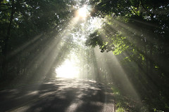 foggy morning (Jerry M Cox) Tags: road morning trees light cloud fog beams