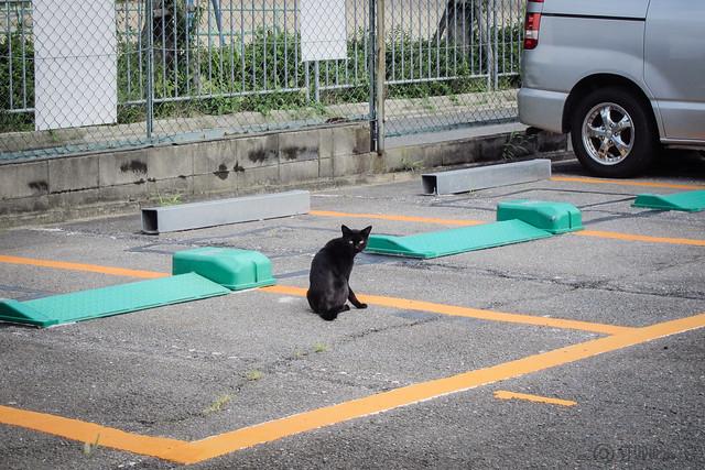 Today's Cat@2013-09-16