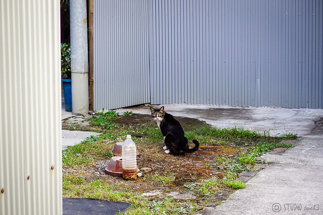 Today's Cat@2013-09-26