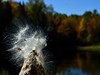 fall beauty (maineoutside2013) Tags: dailynaturetnc12